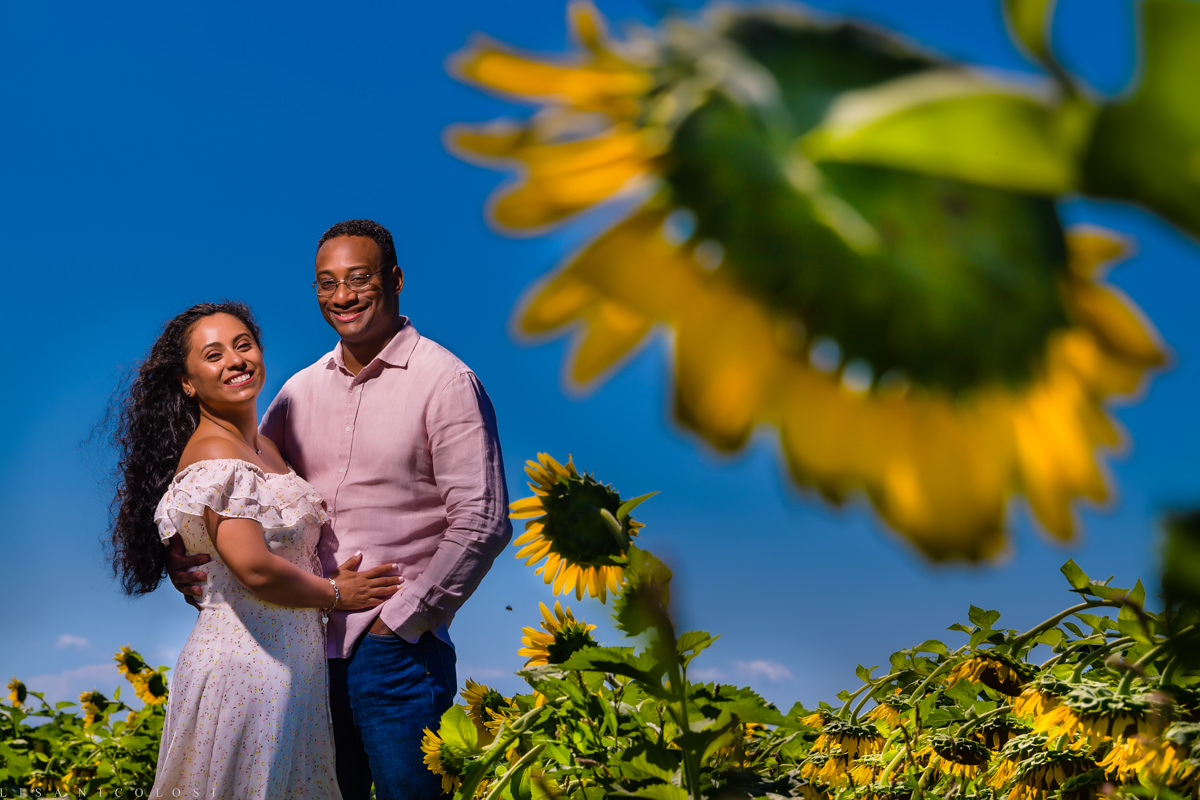 North Fork Sunflower Engagement Session in Mattituck - North Fork Wedding Photographer - Romantic portrait of couple in Sunflower Field