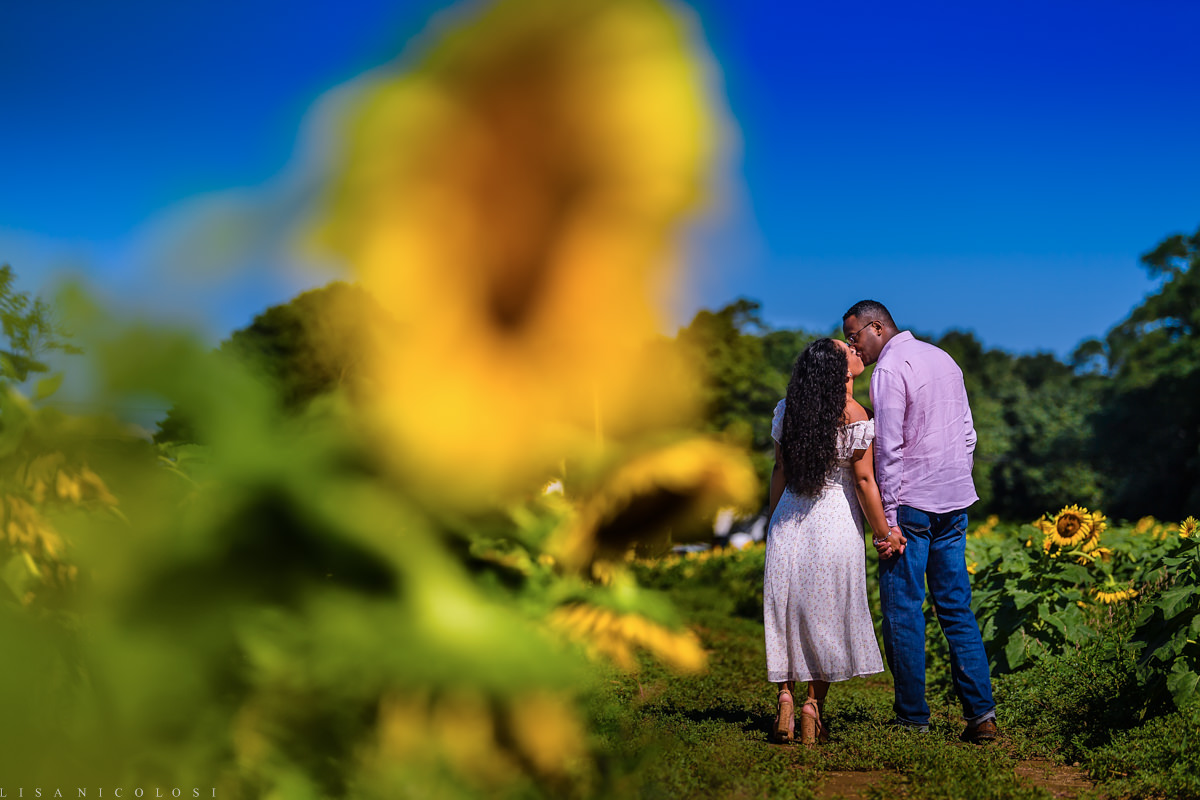 North Fork Sunflower Engagement Session in Mattituck - Romantic portrait of couple walking in Sunflower Field
