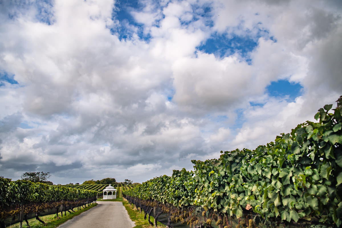 Picturesque view of gazebo and vines at Pellegrini Vineyards