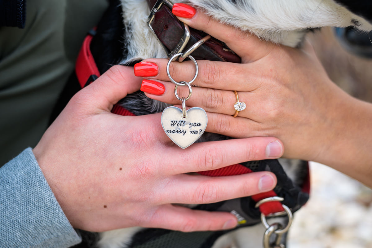 Will you marry me? Doggie Tag. Surprise Proposal